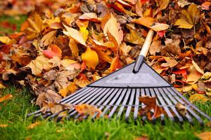 Jesienne Porządki - Fall Cleanup